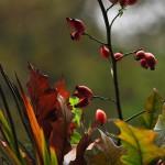 Herbst_3038-2_x