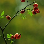 Herbst_3067-2_x