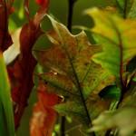 Herbst_3072-2_x