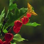 Herbst_3086-2_x