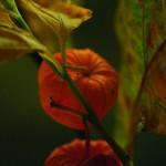 Herbst_3093-2_x