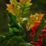 Herbst_3110-2_x