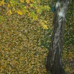 Herbst_3338-2_x