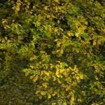 Herbst_3342-2_x