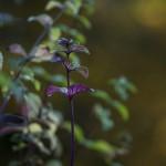 Herbst_3346-2_x
