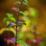 Herbst_3367-2_x