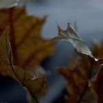 Herbst_3463-2a_x